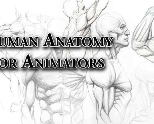 Human Anatomy for Animators - drawings by kimsuyeong