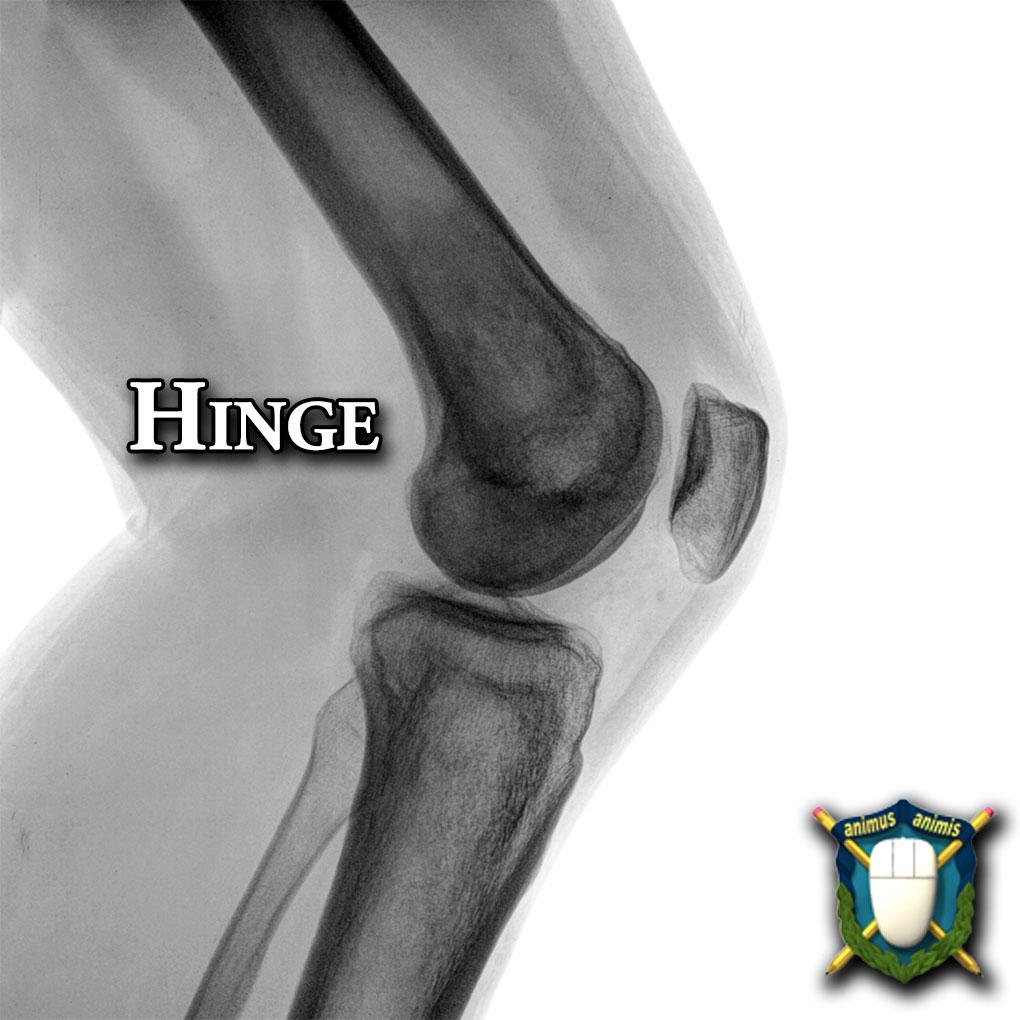 Human Anatomy Archives | Animation Salvation Hinge Joint Knee