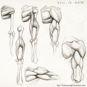 Anatomy study Upper Arm by kimsuyeong